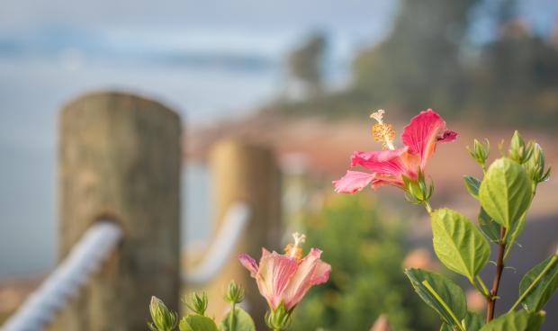 Flowers along Douglas Lake