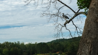 Crane on Watts Bar Lake
